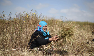 Sitting woman bundles herbs in field