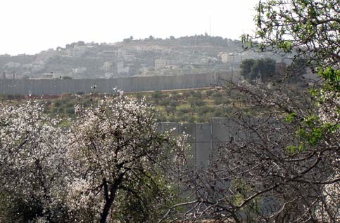 Image: Israel's wall in the West Bank is effectively annexing a large percentage of Bethlehem's agricultural land (Timonthy Seidel)