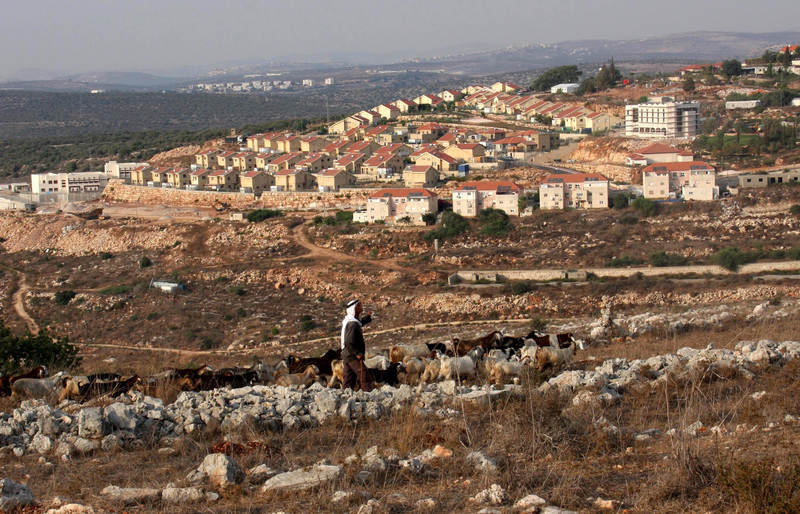 Herder walks with sheep in front of Israeli settlement