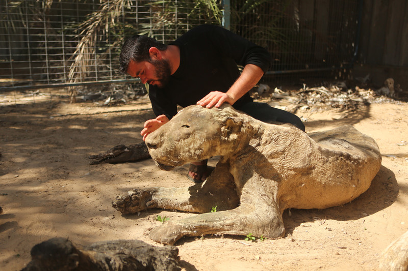 Man examines head of taxidermy lioness
