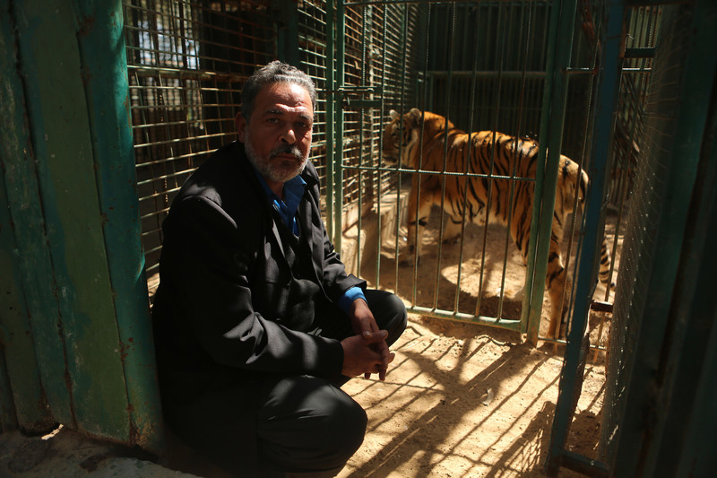 Man squats next to tiger in cage
