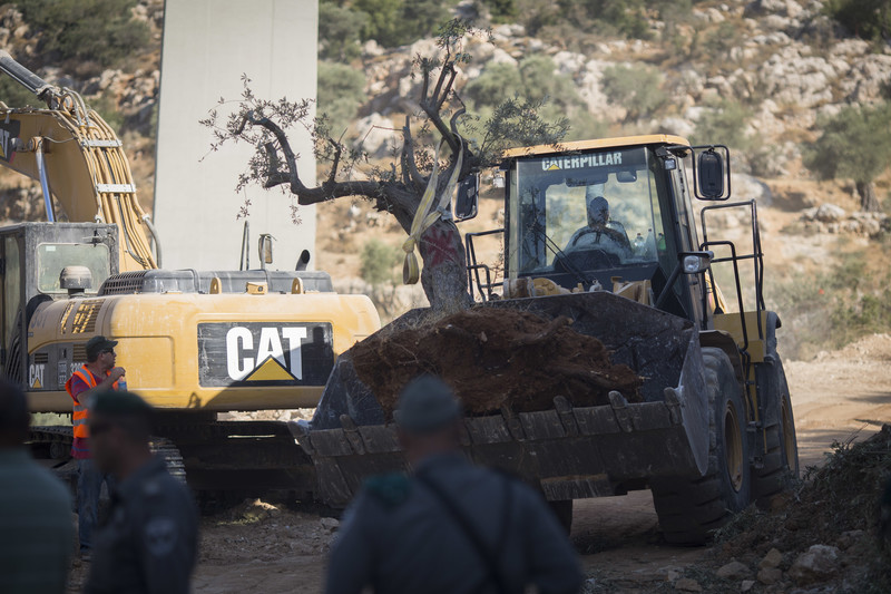 Olive tree sits in scoop of Caterpillar bulldozer as Israeli officers look on