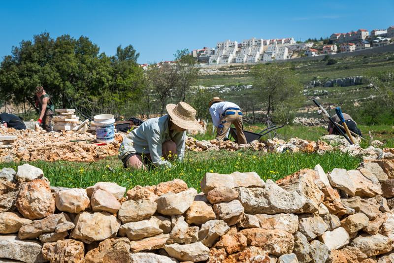 Volunteers kneel on terraced ground with Israeli settlement in distance