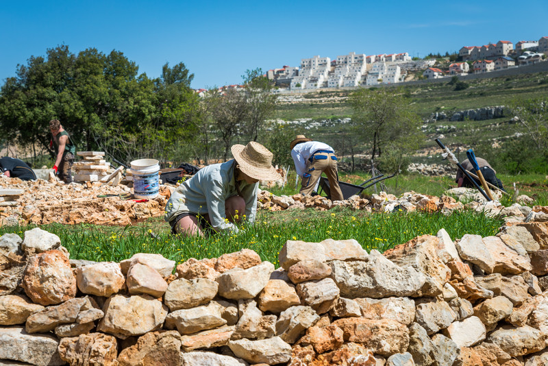 Volunteers kneel on terraced ground with Israeli settlement in distance
