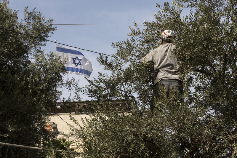 An Israel flag on a settlement home flutters right behind Muhammad Quneibi's olive orchard.