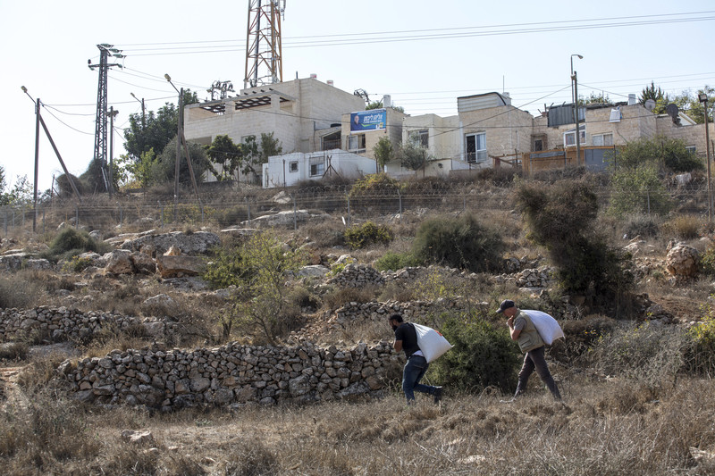 Two men carry bags of olives a short way downhill from an Israeli settlement.