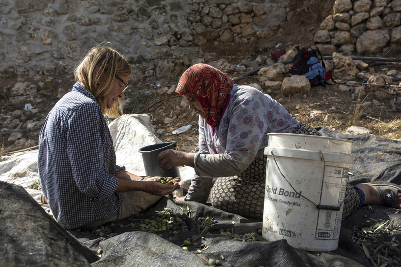 Two women select freshly picked olives from a sack.