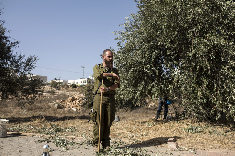 An Israeli soldier watches over a family picking olives.