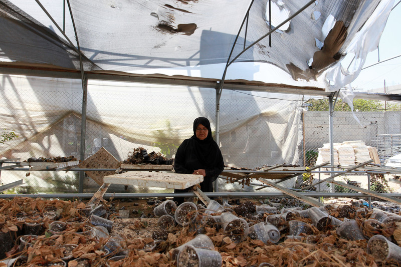 Woman standing in torn-up greenhouse looks at table strewn with pots and plant debris