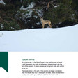 Screenshot of exhibition catalog shows photograph of wolf with a caption describing the location as the northern part of Israel