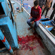 Man sits on edge of ship near pool of blood