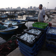 Mann standing at harbor next to boxes of fish looks toward sea