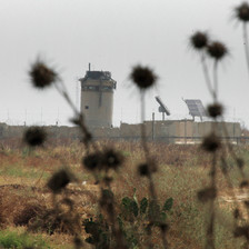 Photo shows wild plants in an empty field with militarized border wall and military watchtower in background