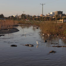 Birds migrate to polluted Wadi Gaza.