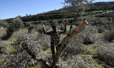 Man throws up his arms in front of tree damaged by settlers