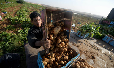 A man pours potatoes from one box into another box at a farmA