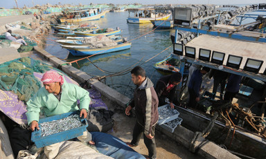Man carries bin of fish in harbor next to moored boats