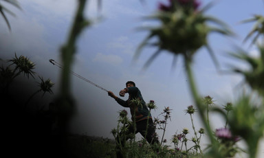Photo taken from low angle shows young protester with slingshot surrounded by thistle