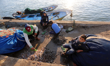 Men and boys sort fish at a dockside