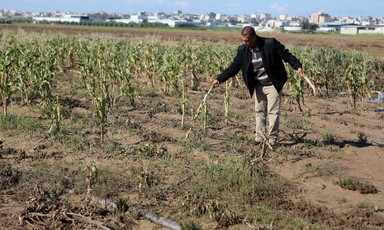 Man stands in a field