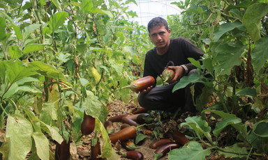 Man hunkers down, holding two eggplants